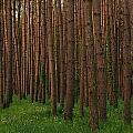Greening In The Woods by Juanita L Ruffner