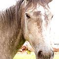 Grey Horse by Joris Shaw