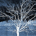 Grey Magical Tree by Sheila Kay McIntyre