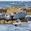 Grey Seals by Andrew  Michael