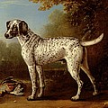 Grey Spotted Hound by John Wootton