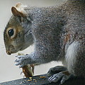 Grey Squirrel Dining Out by Ben Upham III
