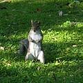 Greynolds Park Squirrel by Maria Bonnier-Perez
