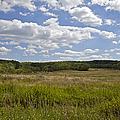 Griggstown Native Grassland Preserve by David Letts