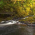 Grist Mill Creek by Mike Reid