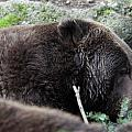 Grizzley - 0004 by S and S Photo
