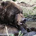 Grizzley - 0008 by S and S Photo