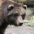 Grizzley - 0021 by S and S Photo