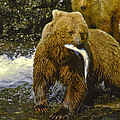 Grizzly Bear And Cubs by Boyd Norton