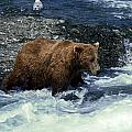 Grizzly Bear Fishing by Sally Weigand