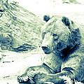 Grizzly Bear by Steve McKinzie