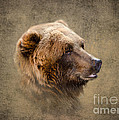 Grizzly Portrait by Betty LaRue