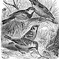 Group Of Sparrows by Granger