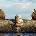 Group Of Three by Derek Holzapfel
