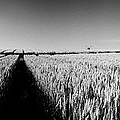 Growing Grain by Jan W Faul