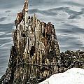 Grumpy Stump by Michele Nelson