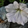 Grundgy Petunia by Bonnie Willis