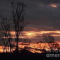 Guilded Sunset by Christian Mattison