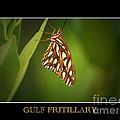 Gulf Fritillary 2 by David Weeks