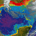 Gulf Of Mexico Dead Zone by Science Source