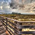 Gulf State Park Boardwalk Corner by Michael Thomas