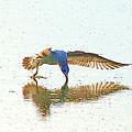 Gull Feeding On Lake by John  Kolenberg