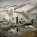 Gulls In The Harbor by Randall Nyhof