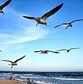 Gulls by John Loreaux