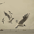 Gulls by Linsey Williams