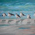 Gulls On Beach by Daniel Gale