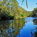Gums Along The River by Kaye Menner