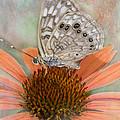 Hackberry Emplorer Butterfly by Betty LaRue