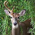 Half A Buck by Sue Stefanowicz