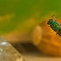 Halicid Bee 6 by Douglas Barnett