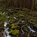 Hall Of The Mosses by Mike Reid