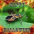 Halloween Greeting Card - Box Elder Bug by Mother Nature