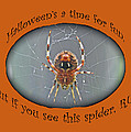 Halloween Greeting Card - Marbled Orb Weaver Spider by Mother Nature