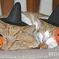 Halloween Party Animals by Living Color Photography Lorraine Lynch