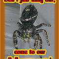 Halloween Party Invitation - Salticid Jumping Spider by Mother Nature