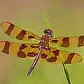 Halloween Pennant by David Freuthal