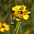 Halloween Pennant by Peg Urban