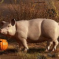 Halloween Pig by Daniel Eskridge