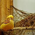 Halloween Yellow Bird by LeeAnn McLaneGoetz McLaneGoetzStudioLLCcom