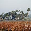 Hammock, Everglades National Park by Robert Ashworth