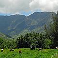 Hanalei Horses by Lynn Bauer