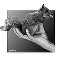 Hand Full Of Squirrel by Brian Wallace