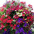 Hanging Basket by Will Borden