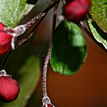 Hanging By A Stem by Susan Herber