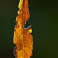Hanging By A Thread by Don Durfee