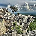 Hanging In North Carolina by Adam Jewell